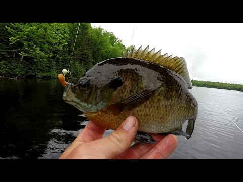 Bluegill Fishing Tips - How To Locate And Catch Big Bluegill (In 2019)