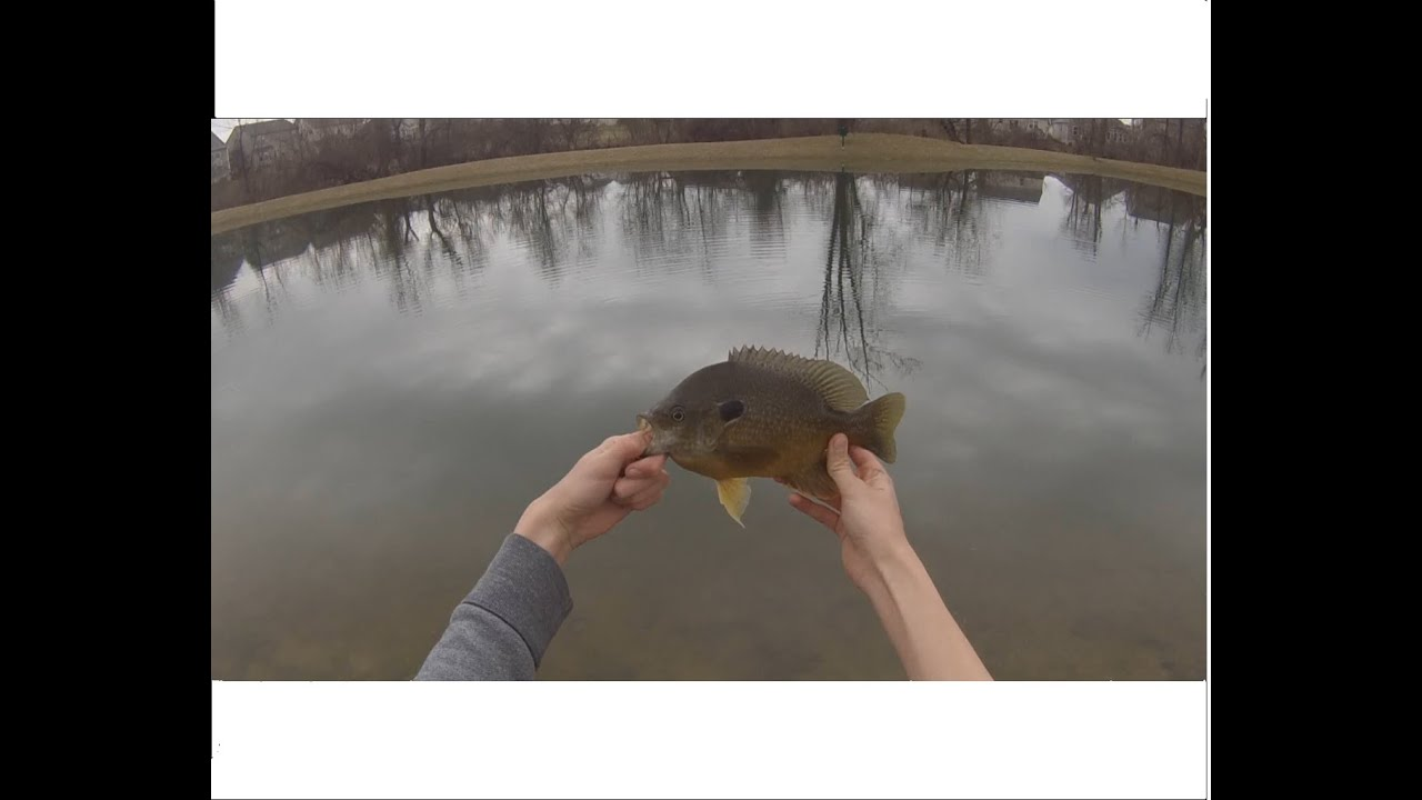 Bait fishing ponds for bass and bluegill in the early for Best bait for pond fishing