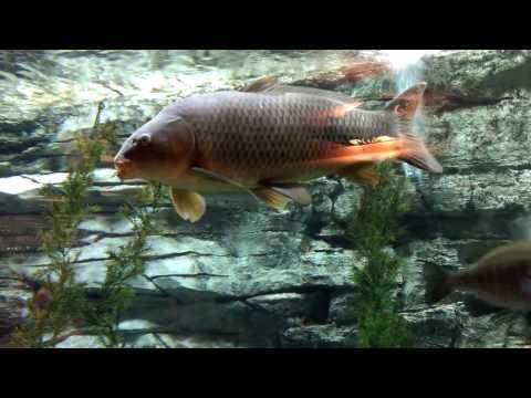 Fun with Fish  at Cabela's Aquarium