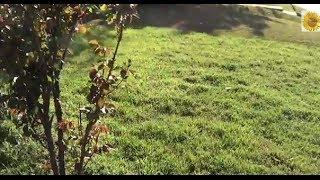 Газоны своими руками(http://www.tsvetynadache.ru/2013/03/blog-post_21.html газоны своими руками, о разных видах газонов, как создать газон самостоятельн..., 2014-04-17T23:55:19.000Z)