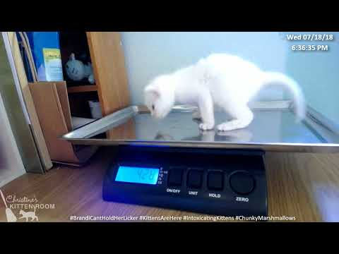 Brandi & the Intoxicating Kittens - Weigh in 7/18/2018 (3 weeks)