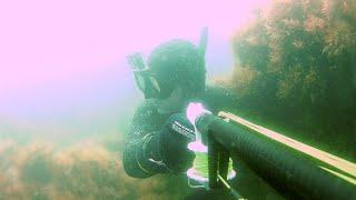 Подводная охота на кефаль