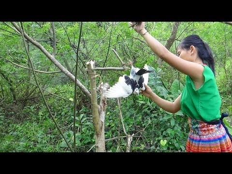 Primitive Technology - Make primitive bird trap and cooking bird - Eating delicious