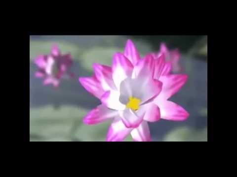 NIỆM PHẬT 4 CHỮ - Đạo Tràng Phước Ngọc (Không lời)