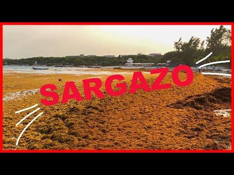 Playa del Carmen Hoy con MUCHO Sargazo / adunadjtv / abril 2019