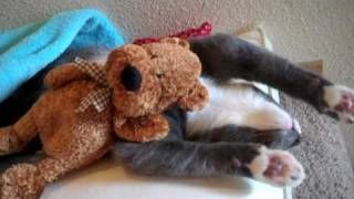 Cute Kitten Hugs His Teddy Bear EXTENDED VERSION