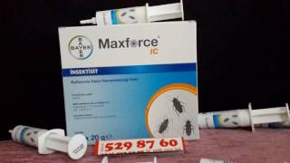 Bayer maxforce jel hamamböceği ilacı.