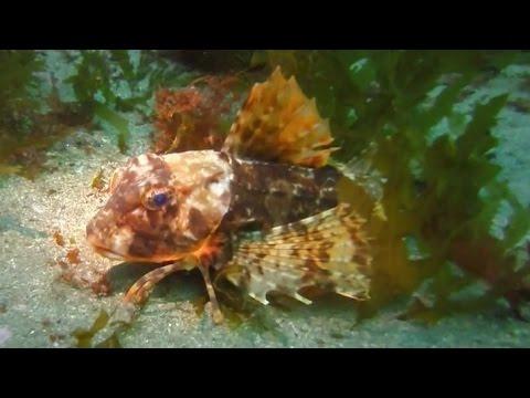 Scuba Diving in Fanore, West Coast, Ireland 2014 GoPro HD