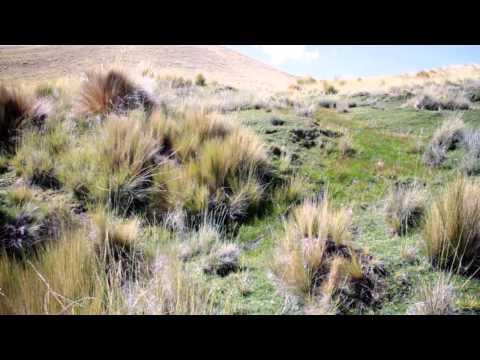 Adaptación al cambio climático en ecosistemas de montaña. Caso: Los Andes del Perú