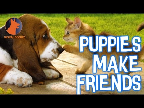 LOL Watch Puppies Meet Cute Kittens, Goats, Horses, Cats and Goats