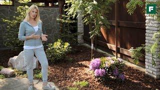 видео Растения для ландшафтного дизайна: типы цветников