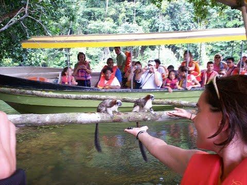 Riding a boat on Gatun Lake on Panama Canal and feeding Tamarin Monkeys in Panama