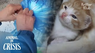 Kittens Tied Up In Trash Bag Cry For Dear Life, Hoping People'd Save Them | Animal in Crisis EP179