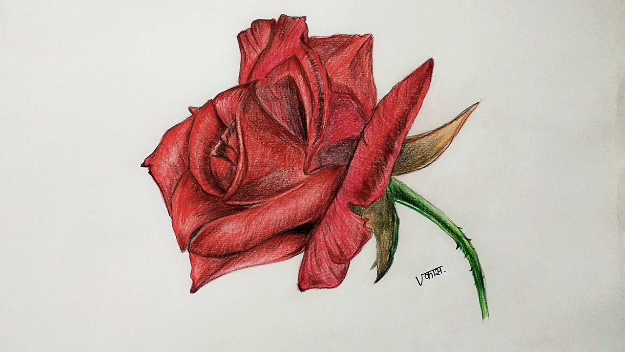 Rose Drawing with Color Pencils | Artistic Vikas - YouTube