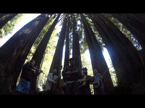 Old Salt Union - Redwood (Live from the Redwood Forest)