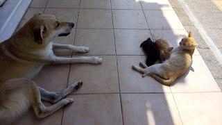 Sokak Köpeği Sokak Kedisini Koruyor