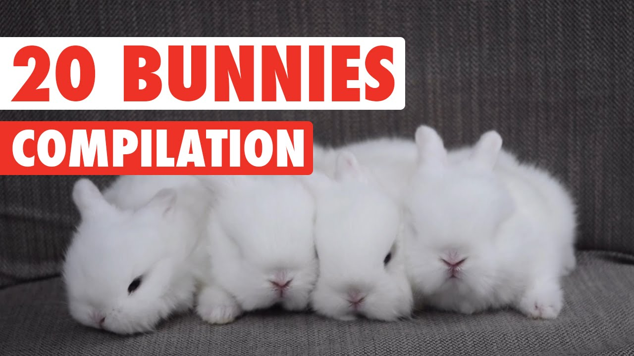 20 Funny Bunnies Pet Video Compilation 2016