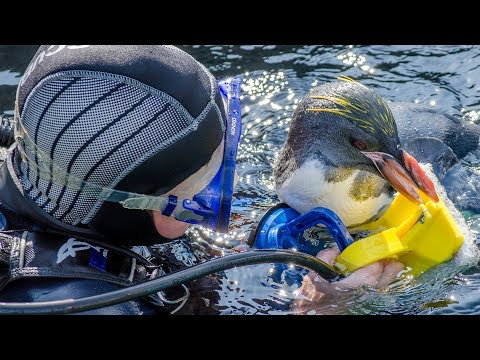 England's Seafood Coast: Swim with the Penguins in 360 VR