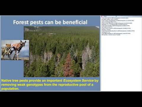 Hemlock Woolly Adelgid: Ecology, Management and Spread in New York