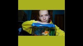 Новый питомец золотая рыбка, готовим аквариум