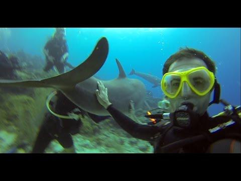 Curaçao - Mergulho com Golfinhos