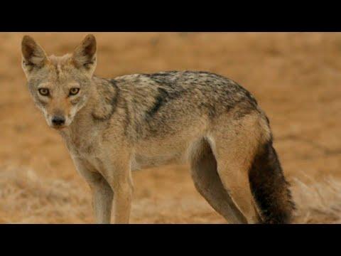 وثائقي - الحياة البرية علي ضفاف نهر الاردن - عالم الحيوان