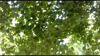 03062010058 Camping Mondial Vallon Pont d Arc Ardeche.mp4