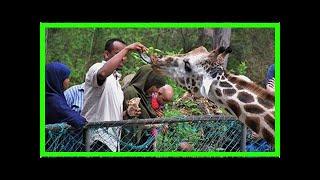 Breaking News   SEBUNYA: It's not all grim news about wildlife in Africa