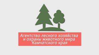 Агентство лесного хозяйства и охраны животного мира Камчатского края