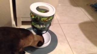 Cat Feeder Slows Down Eating