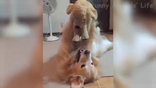 🤣 FUNNY 🐶 Dogs and 😻 Cats - Awesome Funny Pet Animals Life Videos 2019😇