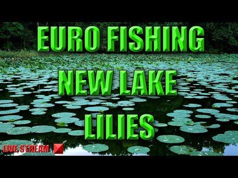 Euro Fishing - New DLC Lake Called Lilies
