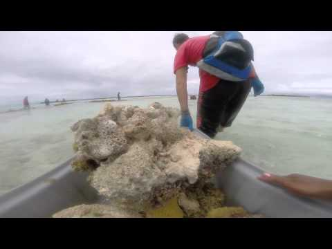 Namdrik Atoll Coconut Diaries VideoBlog 24 Traditional Rock Trap Fishing