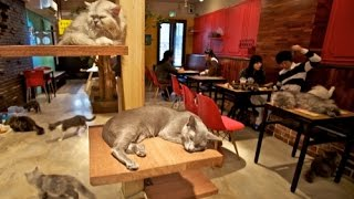 Dcat Cafe Hua Hin  (Part1) / Хуахин Кафе с Кошками (ЧАСТЬ1)