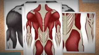 Muscular System: Top 10 facts