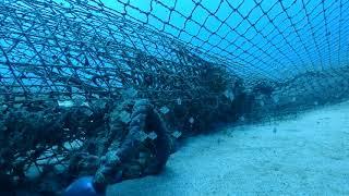 網の側では普通潜れませんが、現地漁師さんのご厚意で機会に恵まれました。
