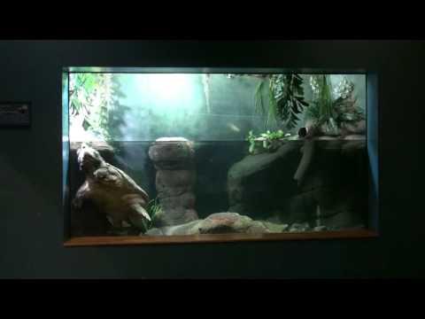 Philadelphia Zoo Alligator Snapping Turtle View Of Exhibit