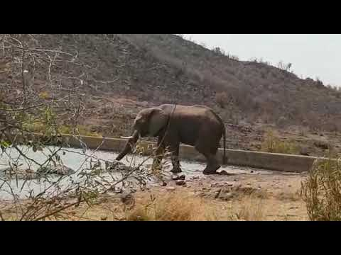 Elephant is to hungry to drink water in philansburg National safari park South Africa