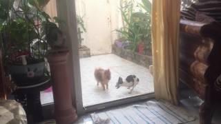 Собака дрочит