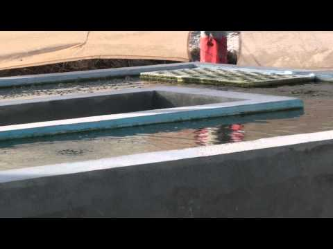 Cape Eleuthera Island School hydroponic beds with crops