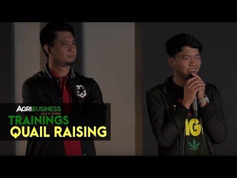 Quail Raising: Successful Quail Raising | Agribusiness How It Works Training