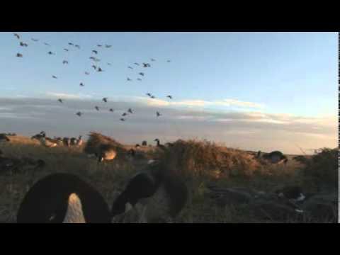Shawn Stahl Triple Fowl Pursuit 9