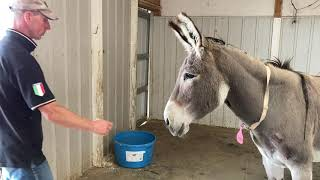 Scared Donkey Learns The Importance Of Trust