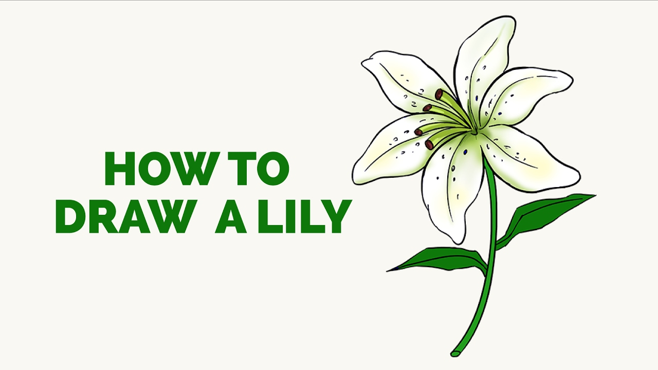How To Draw A Lily In A Few Easy Steps Drawing Tutorial For Kids