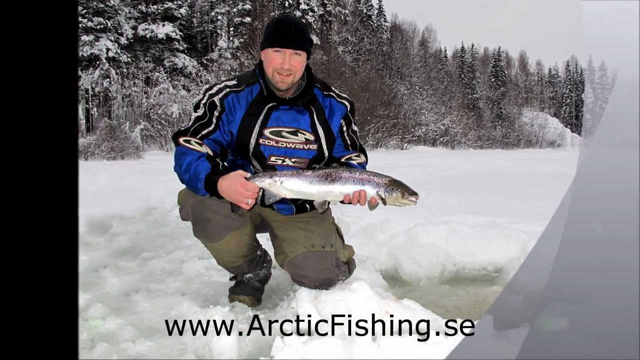 Ice fishing salmon on river lule isfiske efter lax p for Pa ice fishing