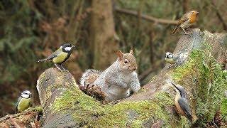 Videos für Katzen : Eichhörnchen und Vögel im Wald