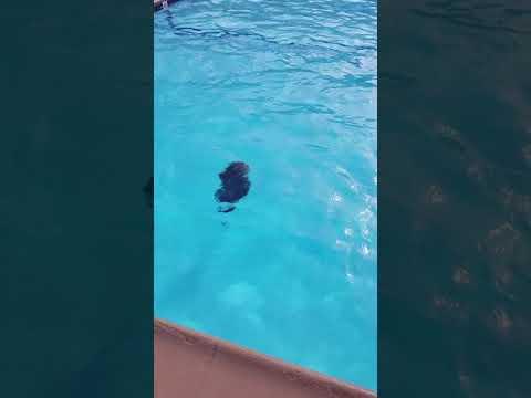 Vincent diving into the deep end