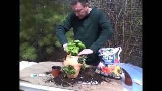 Ppi Italian Herb Garden In A Strawberry Jar