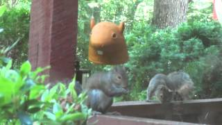 Are You My Mother? Watch The Big Head Squirrel Feeder In Action!