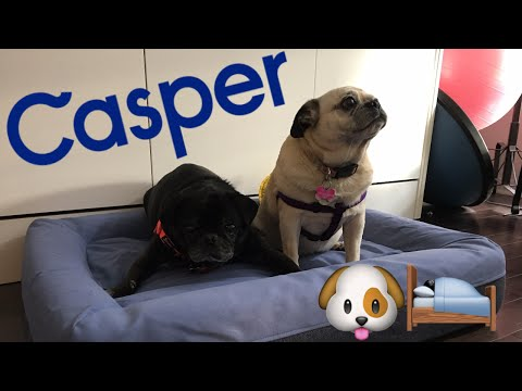 unboxing-casper-mattress-dog-bed---the-ultimate-bed-for-dogs?